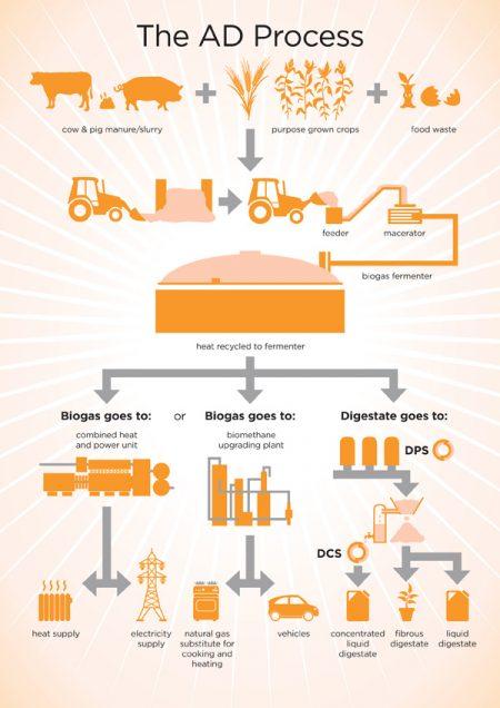 AD process Infographic Design